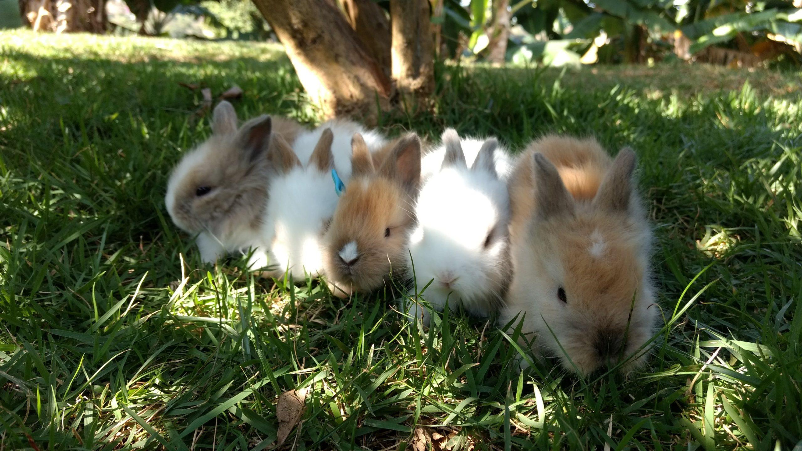 Onde comprar coelhos em BH