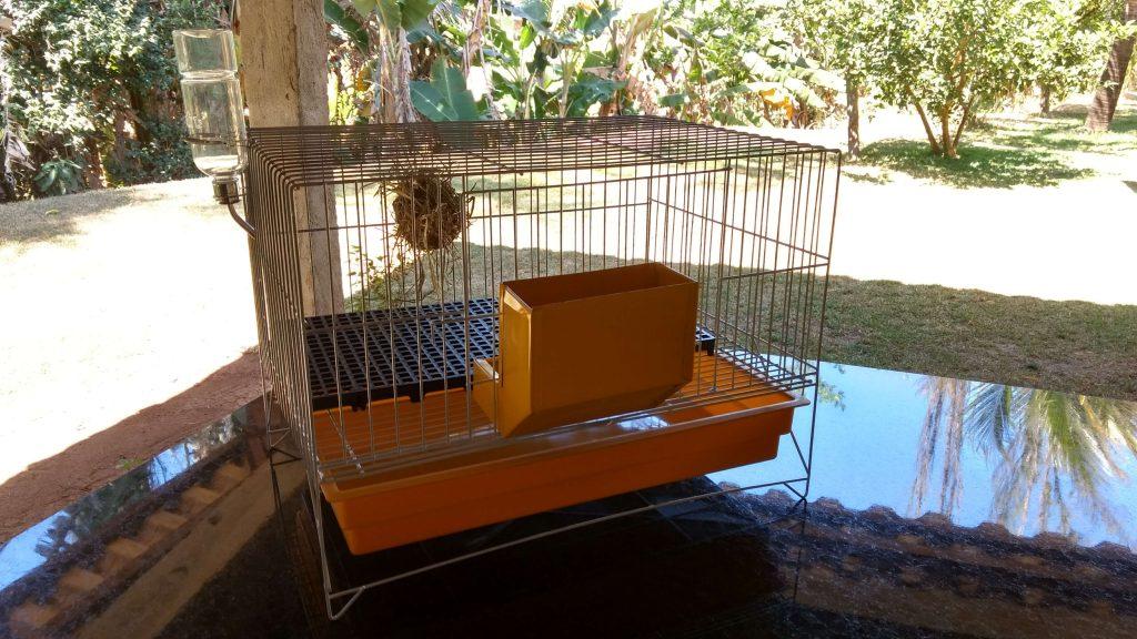 gaiola ideal para mini coelho