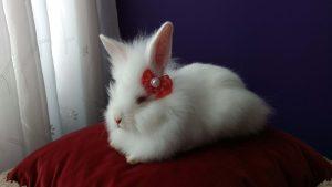 Quer dar um mini coelho no Dia das Crianças? Confira nossas dicas... 6