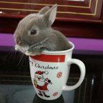 Quer dar um mini coelho no Dia das Crianças? Confira nossas dicas... 2