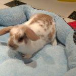Quer dar um mini coelho no Dia das Crianças? Confira nossas dicas... 4
