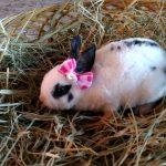 Quer dar um mini coelho no Dia das Crianças? Confira nossas dicas... 3