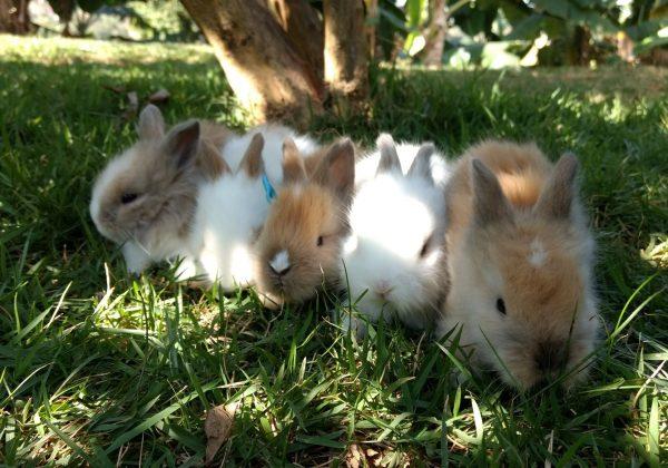 onde-comprar-coelho-em-bh